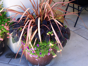 planters, pots, landscape makeover, seasonal color, planter placement, planting, flowers, flower change, landscape specialists, seasonal flowers, seasonal planting, sacramento, folsom, roseville, rocklin, el dorado hills, rancho cordova, lincoln