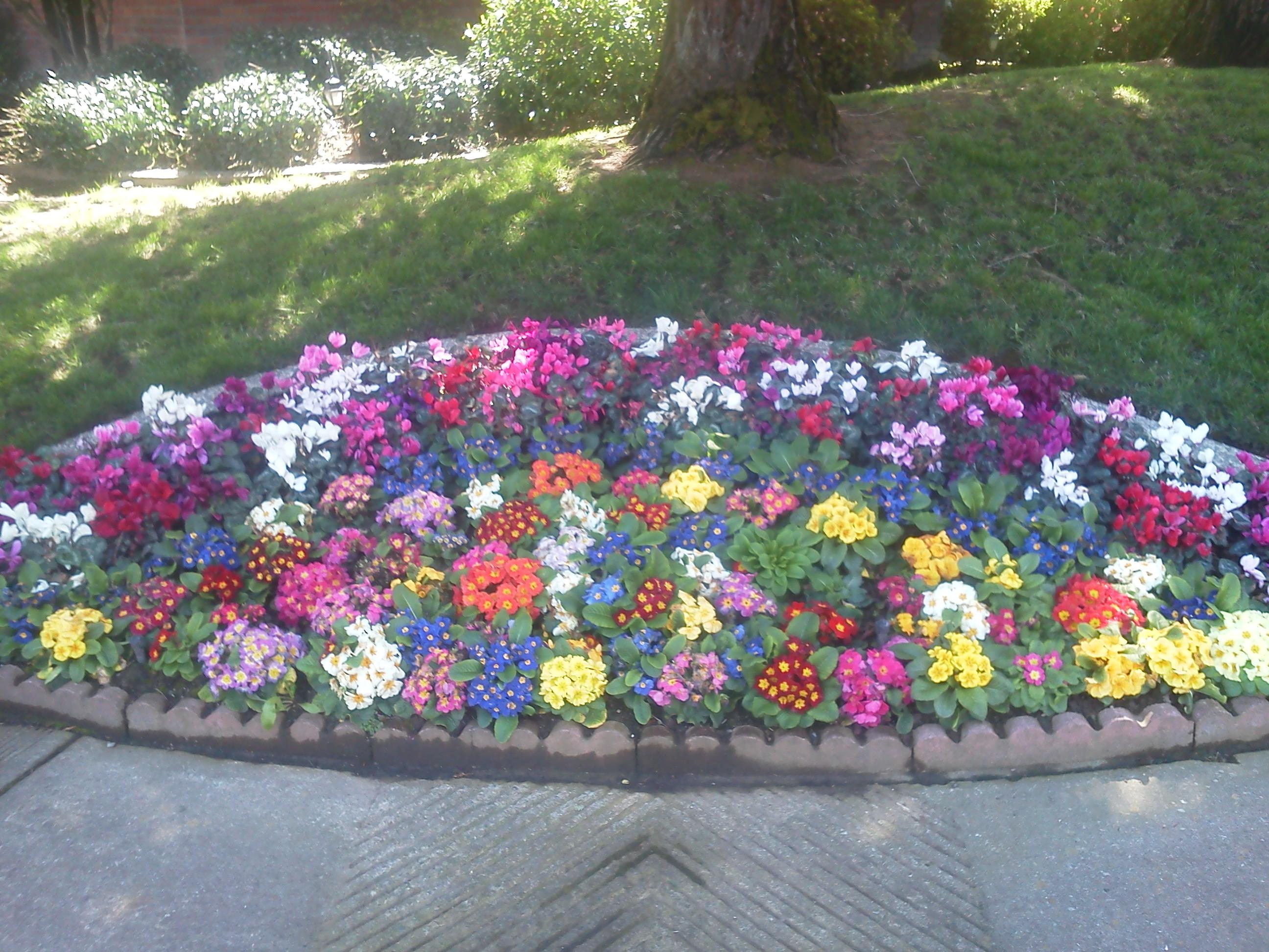 Fall Winter Flower Beds Landscape Makeover Folsom Sacramento